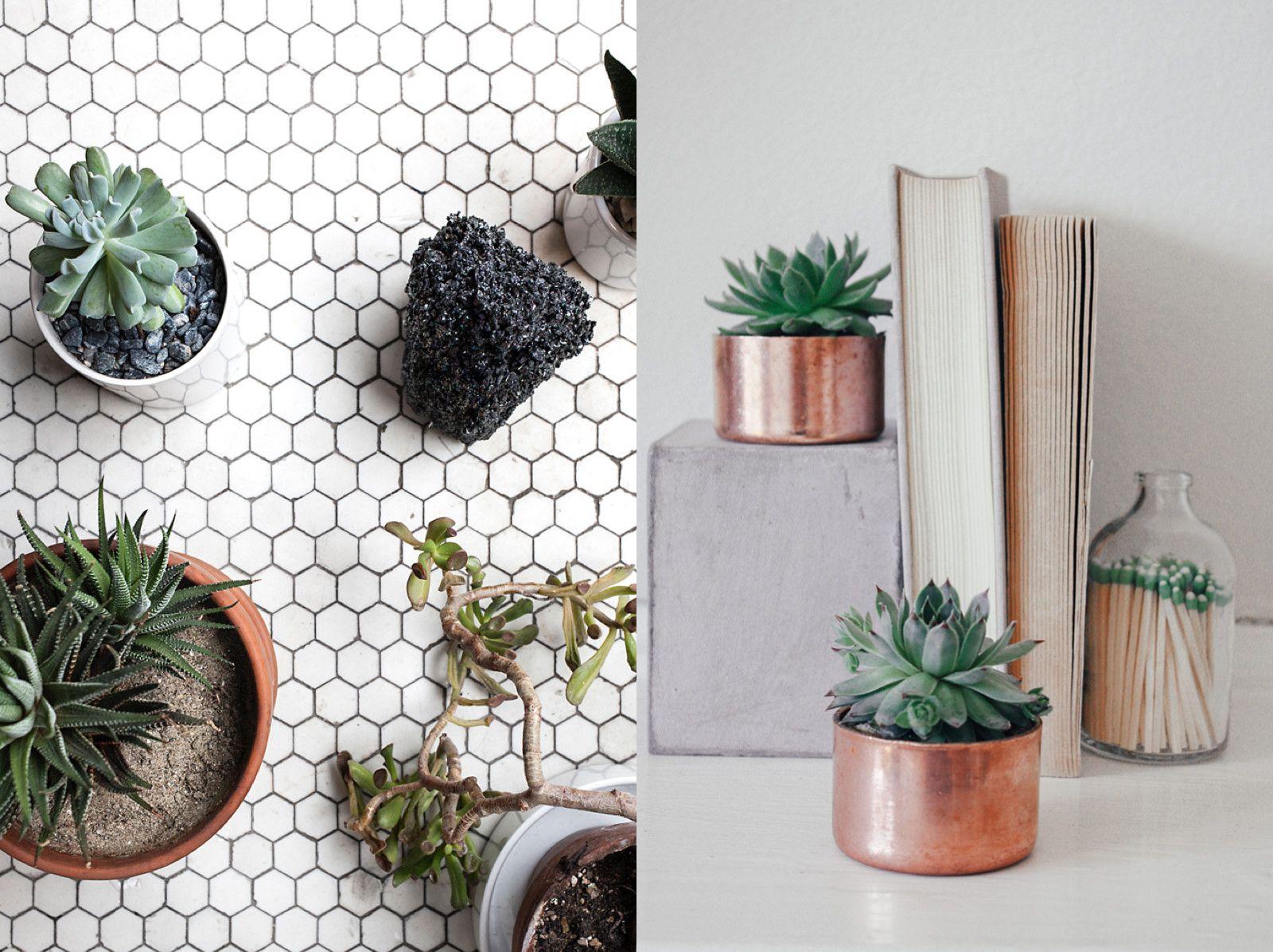 boho house plants boho interior | Home decor | Pinterest