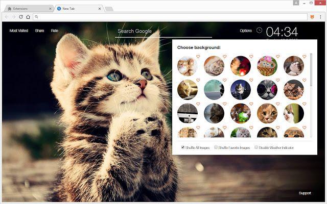 I Loveeeeee Cat S Sooooo Mach Kitten Wallpaper Cute Cats And Kittens Cats And Kittens