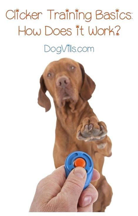 Dog Training Atlanta Dog Training San Antonio Cabela S Gun Dog