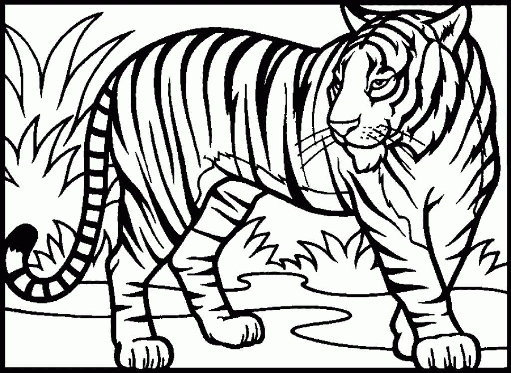 Realistic Tiger Coloring Pages Free Tiger Drawing Animal