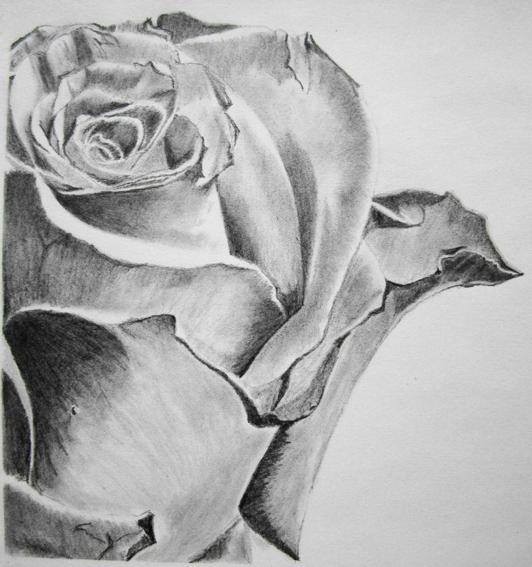 Immagini Da Disegnare Facili Matita Bianco Nero Primo Piano Rosa