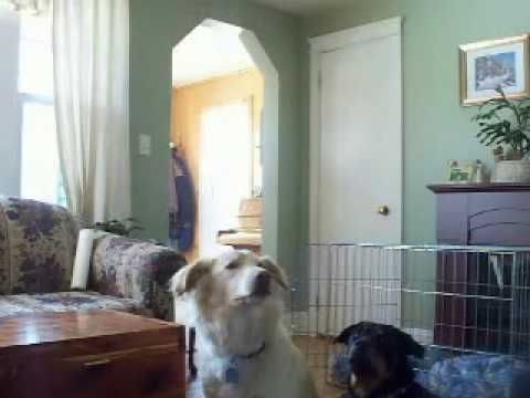 Near The End Watch The Dogs With Images Ghosts Paranormal