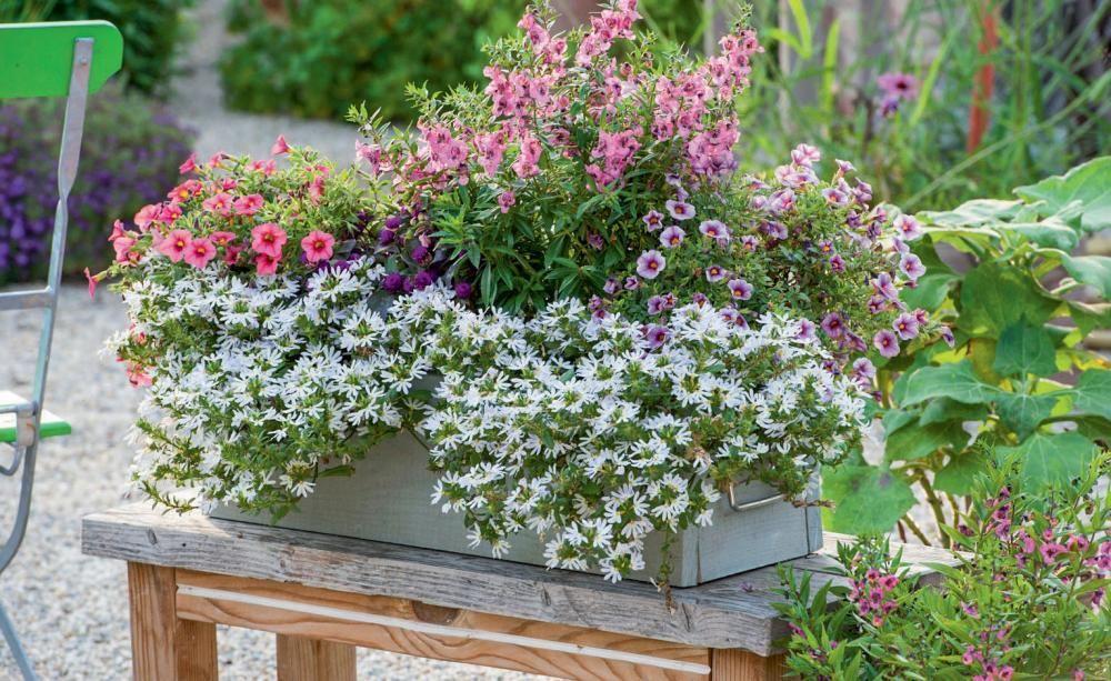 Naturliche Blutenpracht Sommerblumen Fur Den Landhausgarten Sommerblumen Pflanzideen Pflanzen