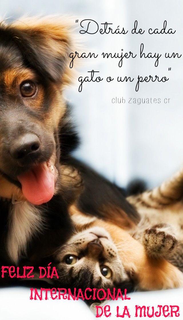 Día Internacional De La Mujer Perros Felices Perros Fotos De Perros