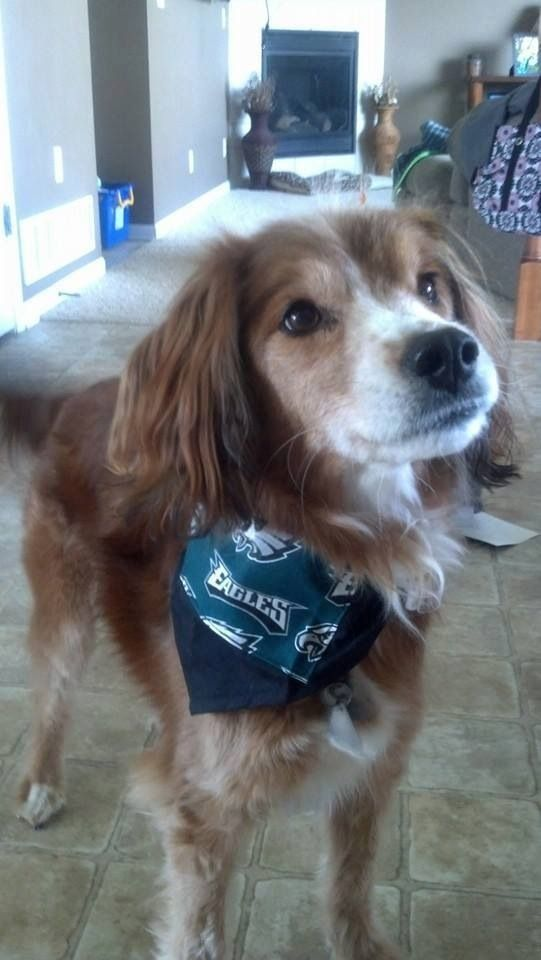 Lostdog 6 29 14 Omaha Ne Mac 156th Amp Fort Area Eagles Bandana 402 670 5793 Lost Pets Of Omaha Area Https M Faceb Losing A Dog Losing A Pet Find Pets