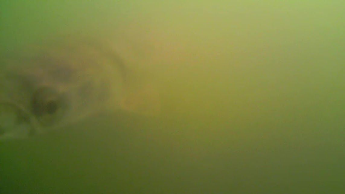 Made it to Brockdale (Lake Lavon) Saturday. Put in the kayak and rigged up with a Crappie Jig and Slab Rig. Lots of wind and waves making the water visibility tough for the Water Wolf Camera. Luckily, did get a glimpse of a little gar! Will have to try again once the water clears up! …
