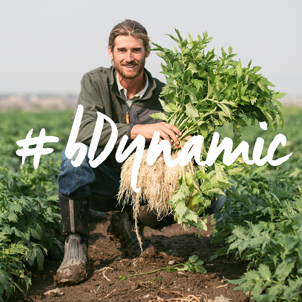 We're proud of our roots! Be a part of the greater cause by sharing in our #bDynamic campaign for #biodynamicfarming and #biodynamictonics for all.