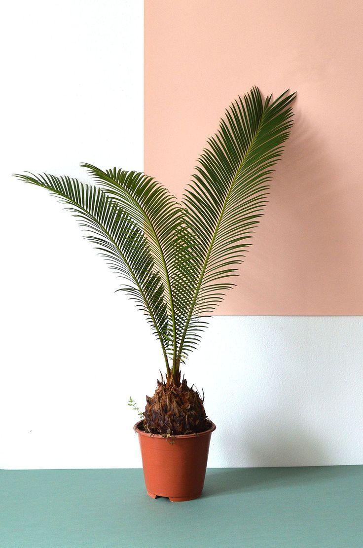 Urban Jungle Bloggers: #plantcolorpop by @Hannhouse