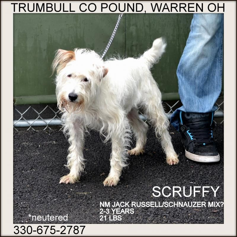 Adopt Scruffy In Dogs In Prison Program On Adoption Dogs