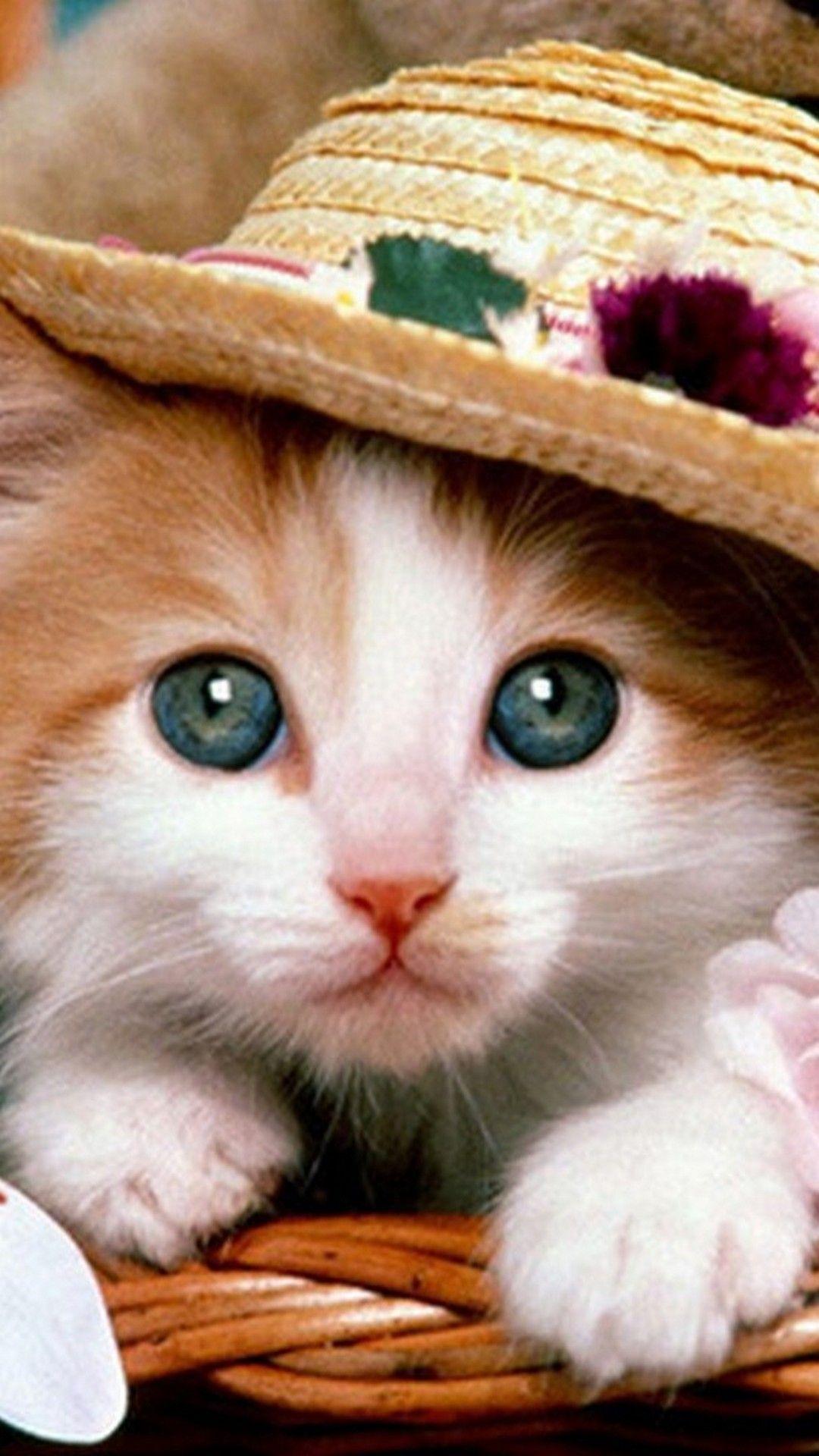 Cute Cat Hat Wallpaper For Iphone Best Iphone Wallpaper Cute Cats And Dogs Funny Cat Wallpaper Cute Cat Wallpaper