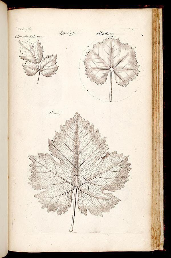 The Anatomy Of Plants Nehemiah Grew 1682 Flora Botanical