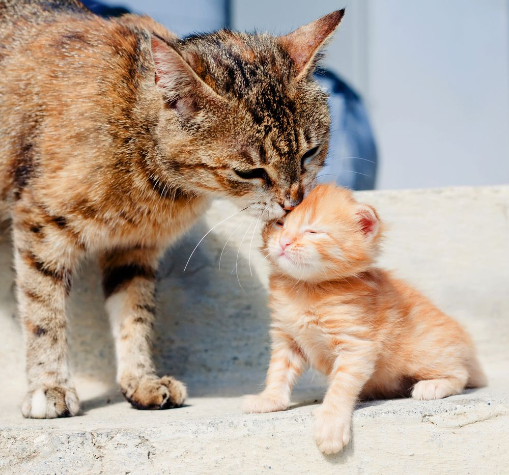 15 Pictures Of Mama Cats And Kittens For Mother S Day Cattime Mama Cat Kittens Cutest Cats