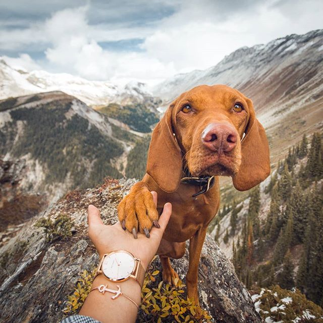 We Ll Come Here Again Right Mom I Think This Is My New Favorite Place To Be Anchored In Love With You And Our Timepiece From Vizsla Dogs Vizsla Puppies Vizsla