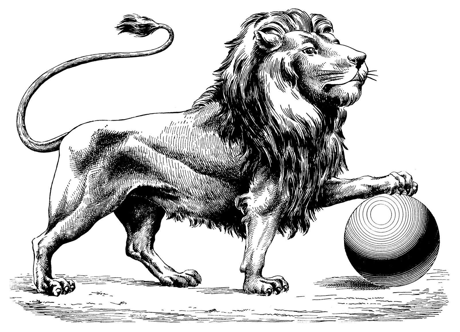Line Art Lion : Vintagefeedsacks free vintage clip art leo the lion prints
