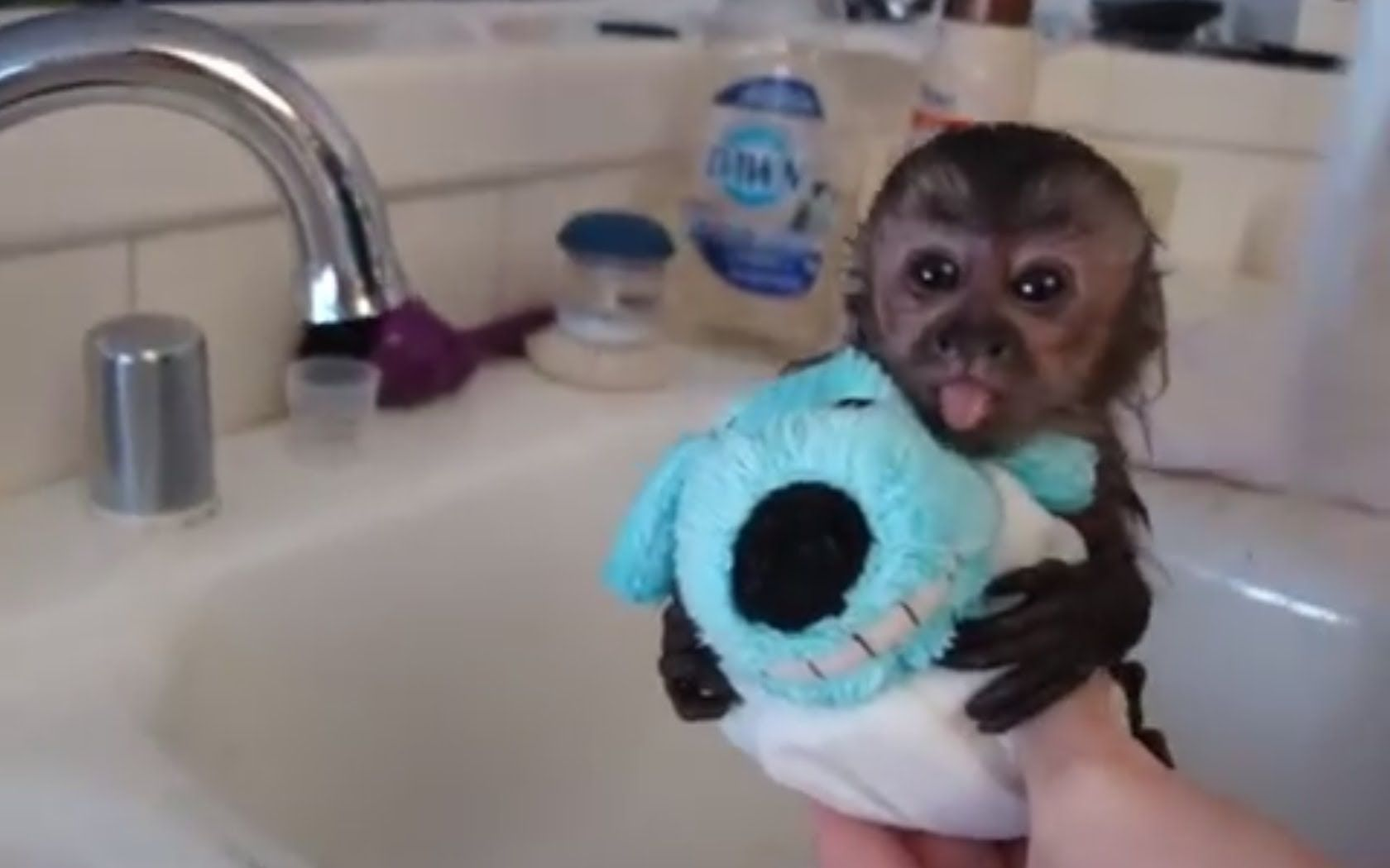 Animals Love Bath Time Super Cute Compilation Cute Baby Monkey