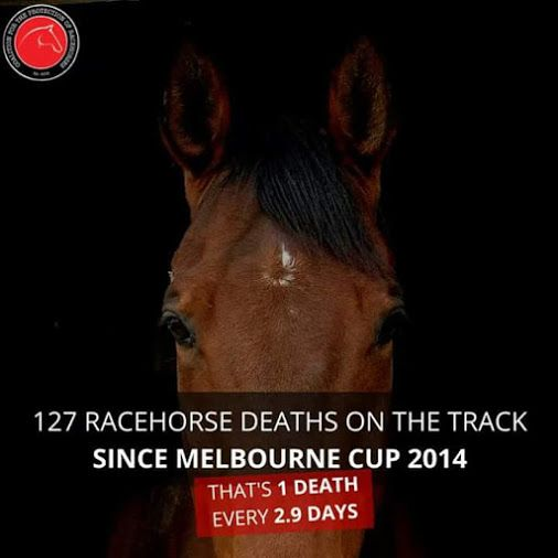 I can't find information on what is the main cause of this, I assume simply over working the #animals. #horse #racing #horseracing #animalcruelty #animalrights #animalabuse #HerSolution