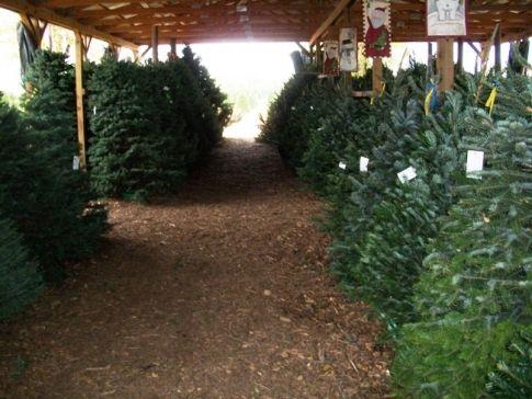 Owasso Christmas Tree Berry Farms In Owasso Offers Nosle Fir Douglas Fir Grand Fir And Fraser Fir Trees As Well As Greener Owasso Grand Fir Christmas Tree