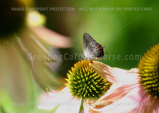 I'm #thinking of you and wanted to tell you so.  Here's a little blue #butterfly on a greeting card.