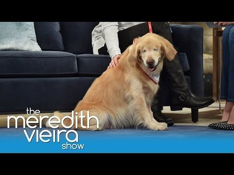 Smiley The Therapy Dog Born Blind Beautiful Animal Love