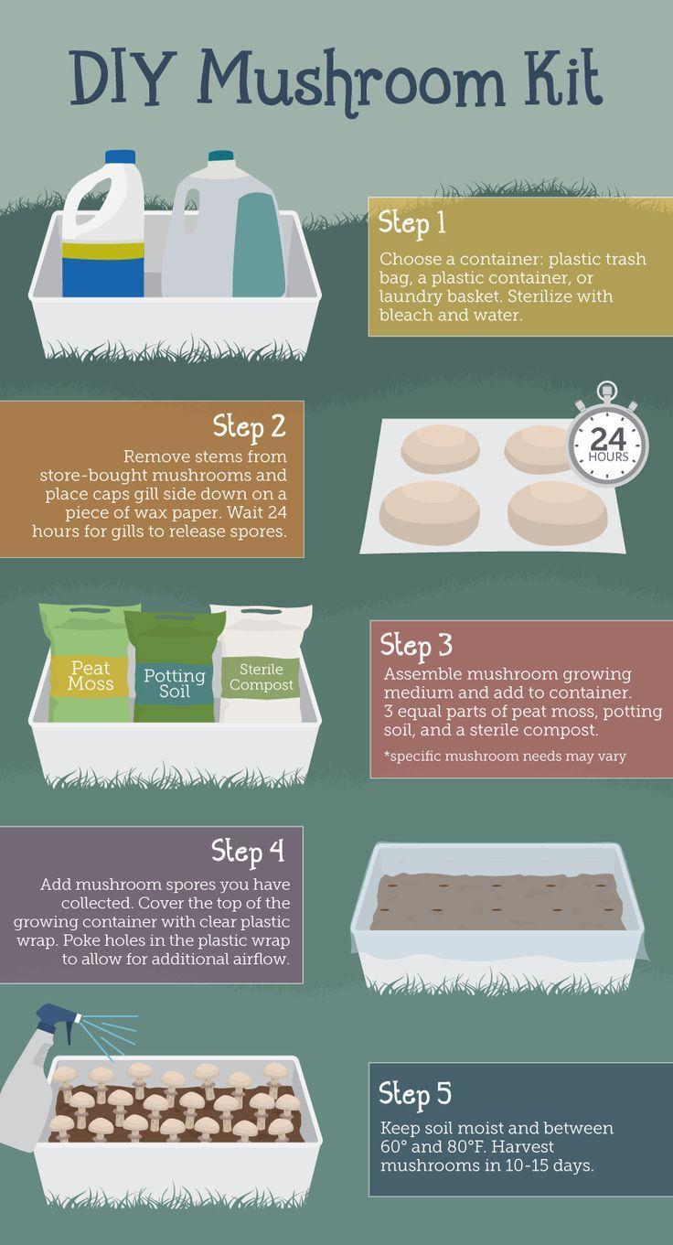 grow your own mushrooms at home green gardenista pinterest g rtnern pilze und g rten. Black Bedroom Furniture Sets. Home Design Ideas