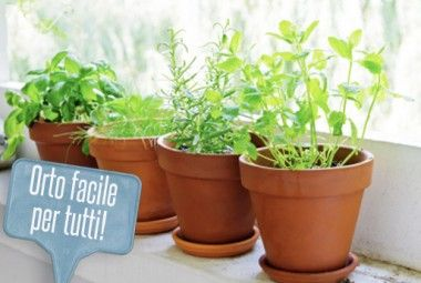 Orto in vaso: le 7 piante più facili da piantare sul balcone ...