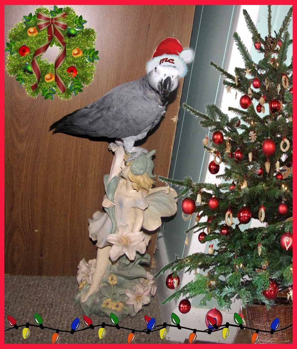 Holiday African Grey Parrot