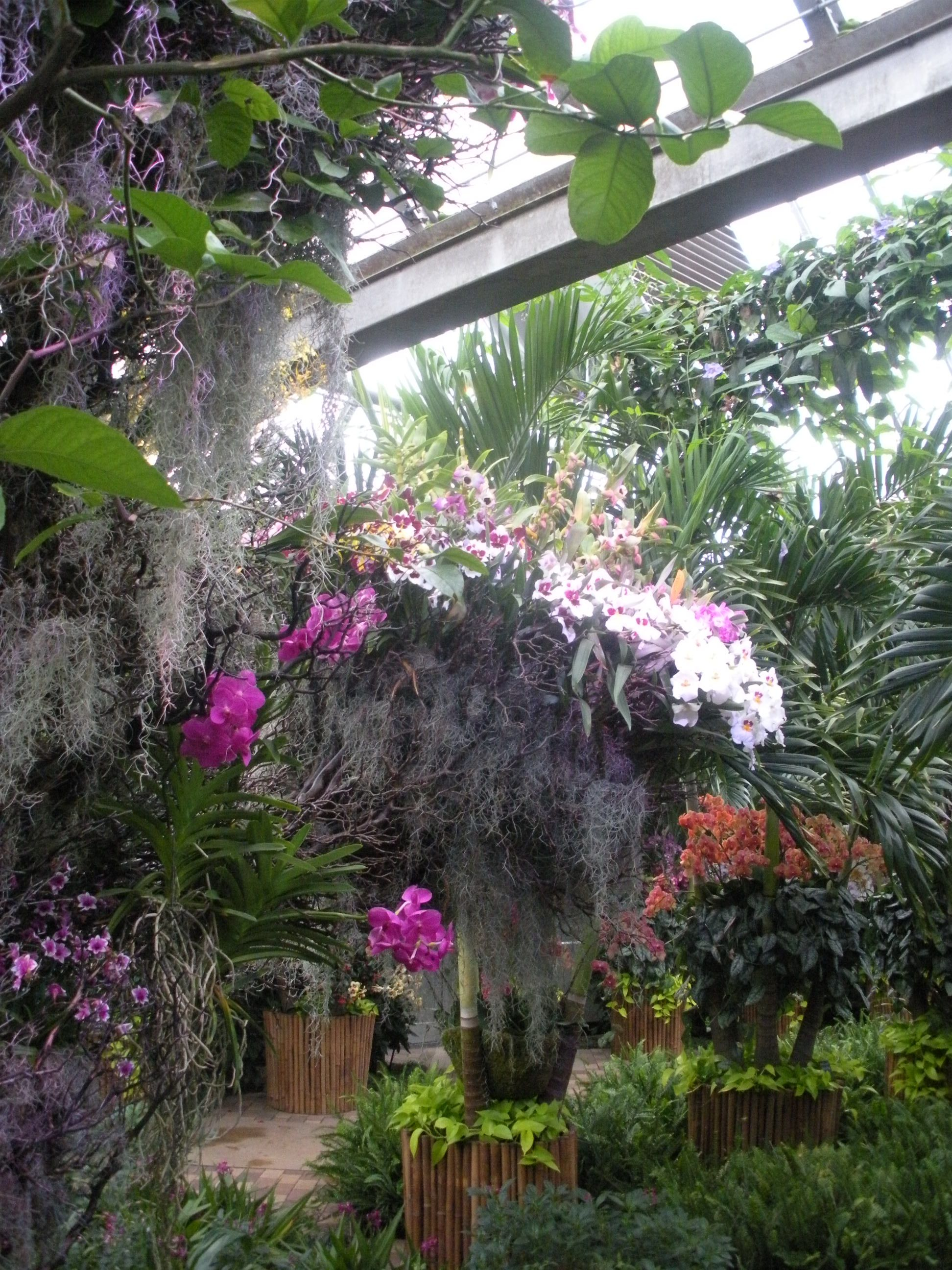 Chicago, Botanical Gardens, Orchids, Gardening