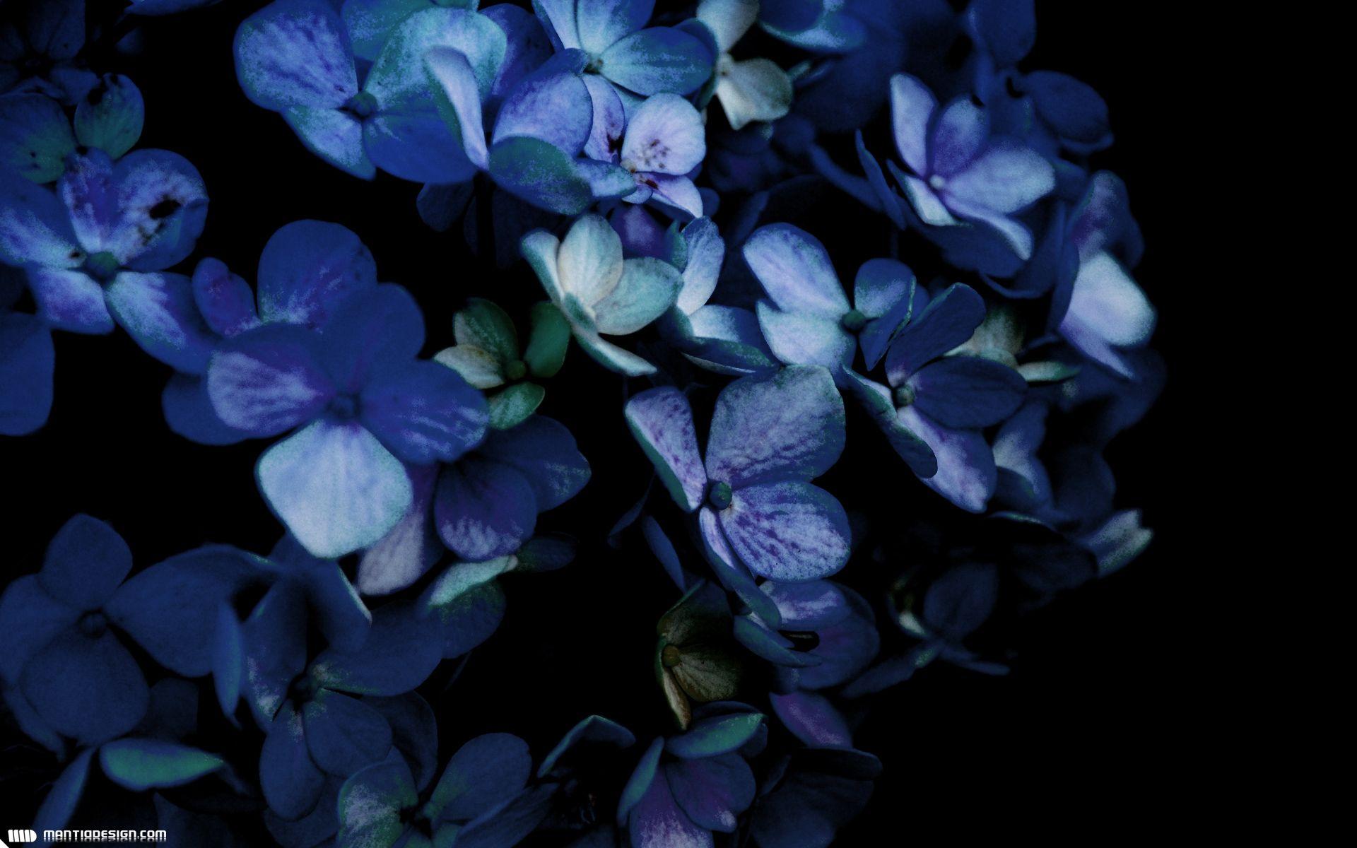 картинки синие цветы обои на телефон смотря что данная