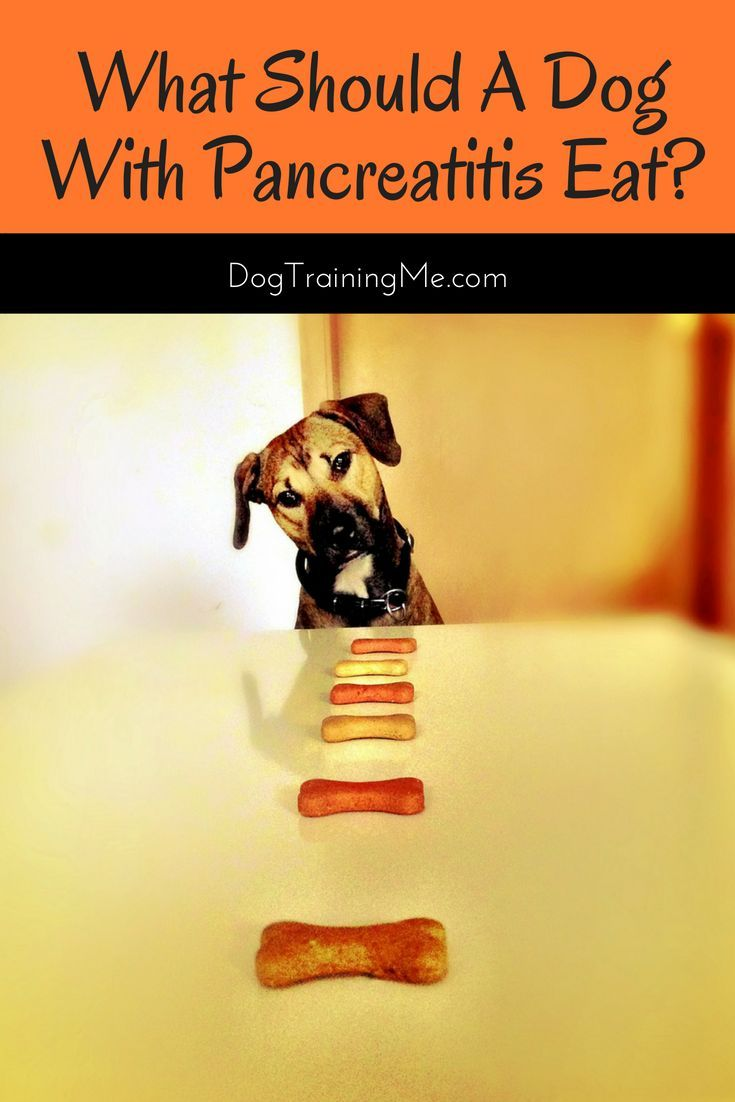 how to fatten up a dog with pancreatitis