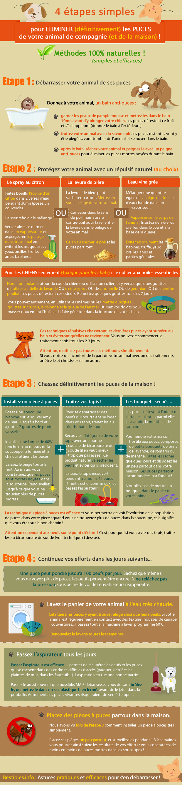 infographie 4 tapes simples pour liminer les puces de votre animal et de la maison au. Black Bedroom Furniture Sets. Home Design Ideas