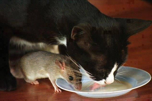 field+mice+pets | Just too cute! Ouan the cat and Tua Lek the field mouse are the pets ...