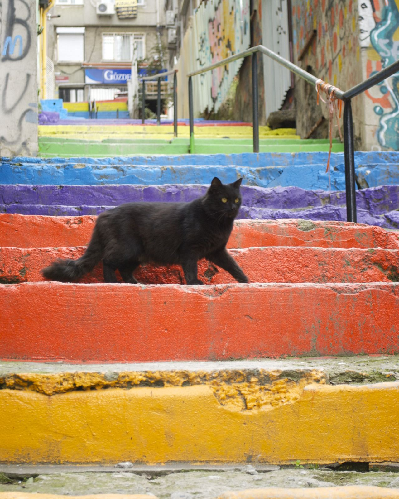 streetcatsistanbul: June 5th, 2015 - (Findikli)For more photos of Istanbul's street cats daily at StreetCatsIstanbul!