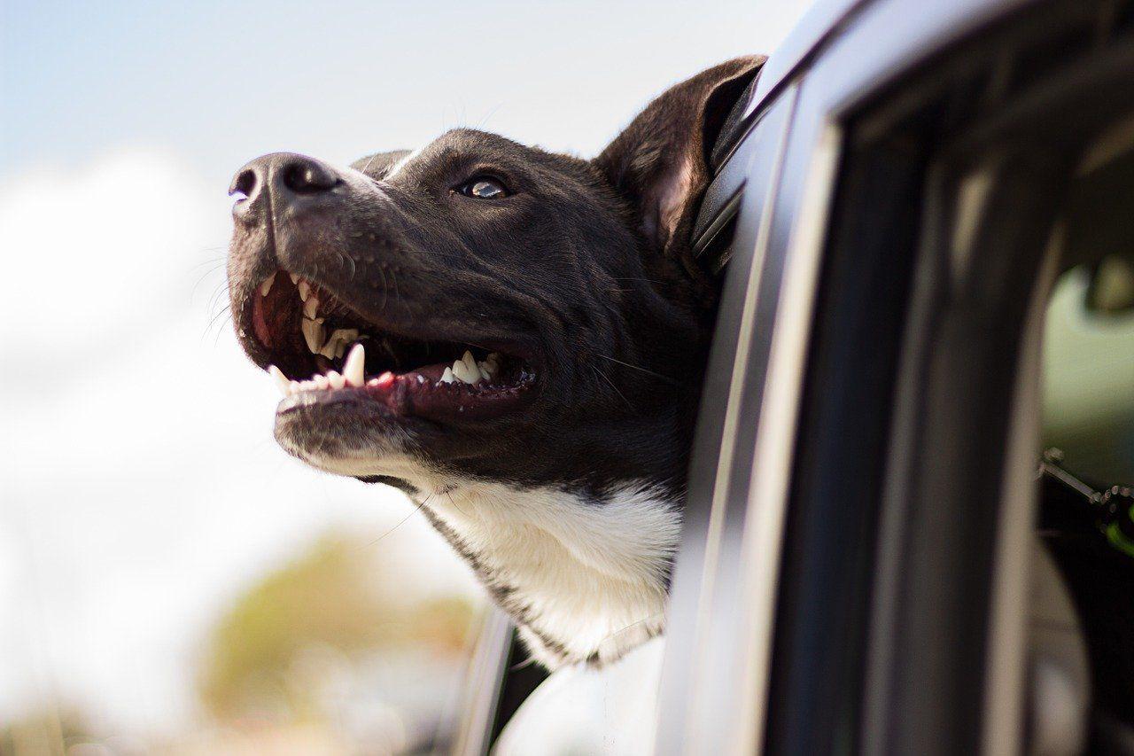 Pet Shop Online Nearest Pet Store Pet Store Near Me Online Pet Store Best Pet Store Pet Products Shop Dog Supplies Wholesale Pet Supplies Wholesale Pet Groomin En 2020