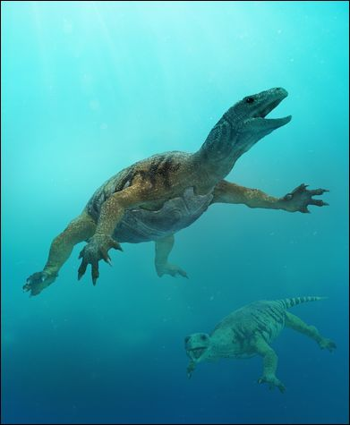 Image result for odontochelys scale