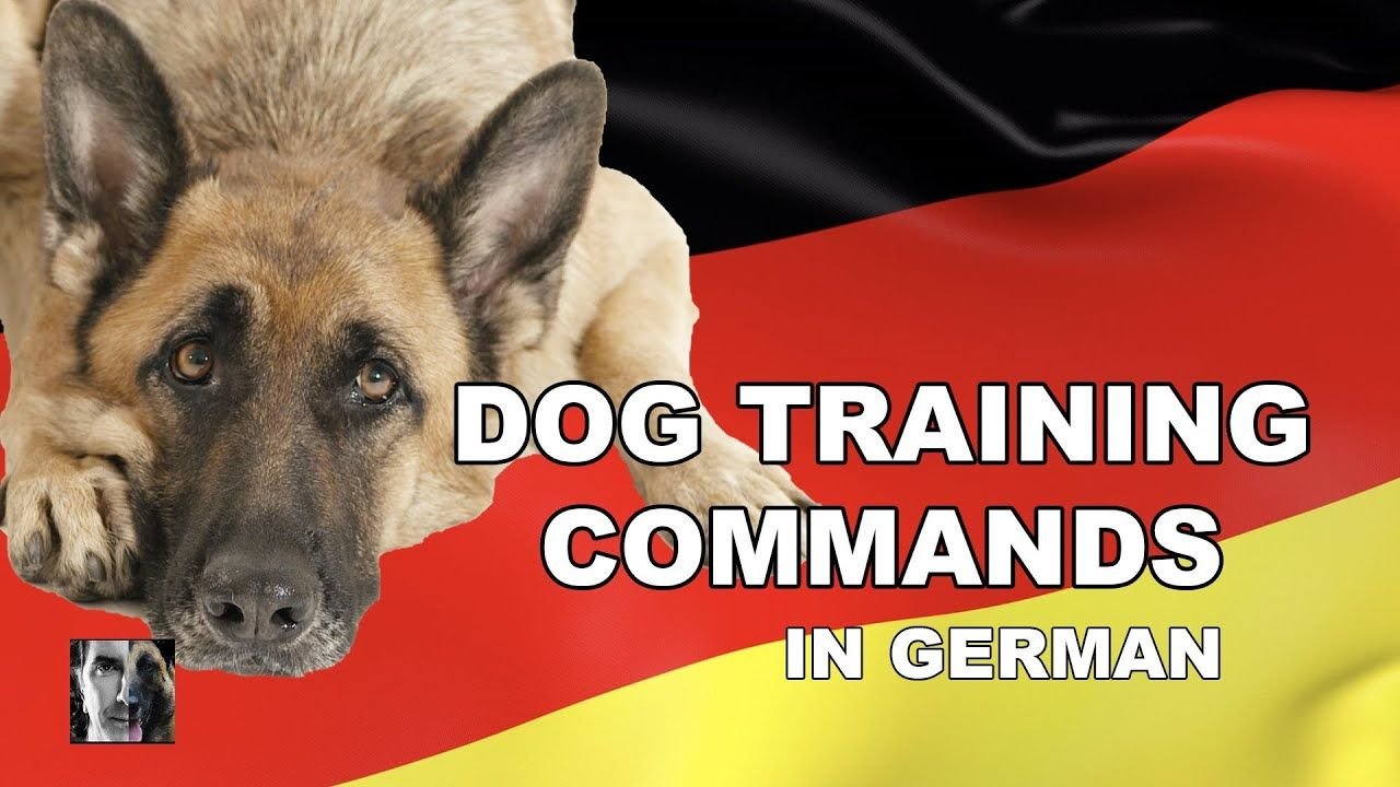 German Dog Training Commands Robert Cabral Dog Training Video