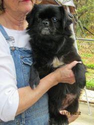 Adopt ZuZu on NE States Pets in Rescue No Kill