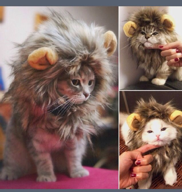 Oml I need this for my cats Halloween costume Cute things Pinterest - cute cat halloween costume ideas