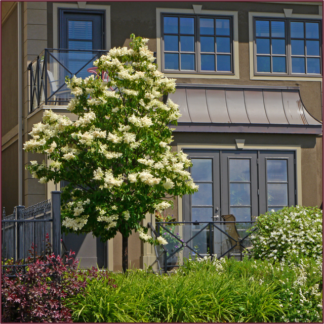 Trees For Small Spaces: Great Tree For Small Spaces