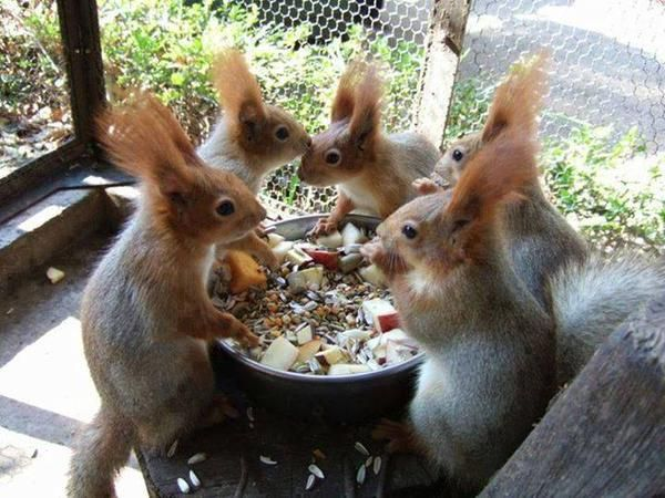 A squirrel get together