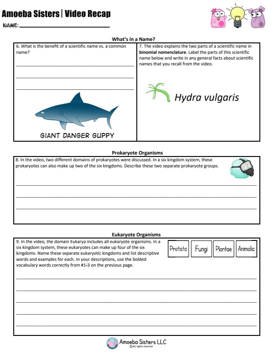 Amoeba Sisters Mitosis Worksheet - worksheet