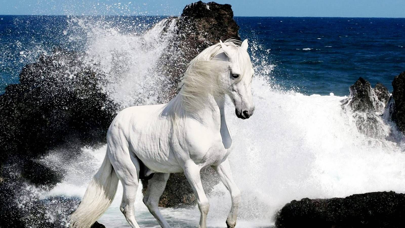 Download Wallpaper Horse Water - 26bcf2538fe046c8fd6309245f145490  Collection_142279.jpg