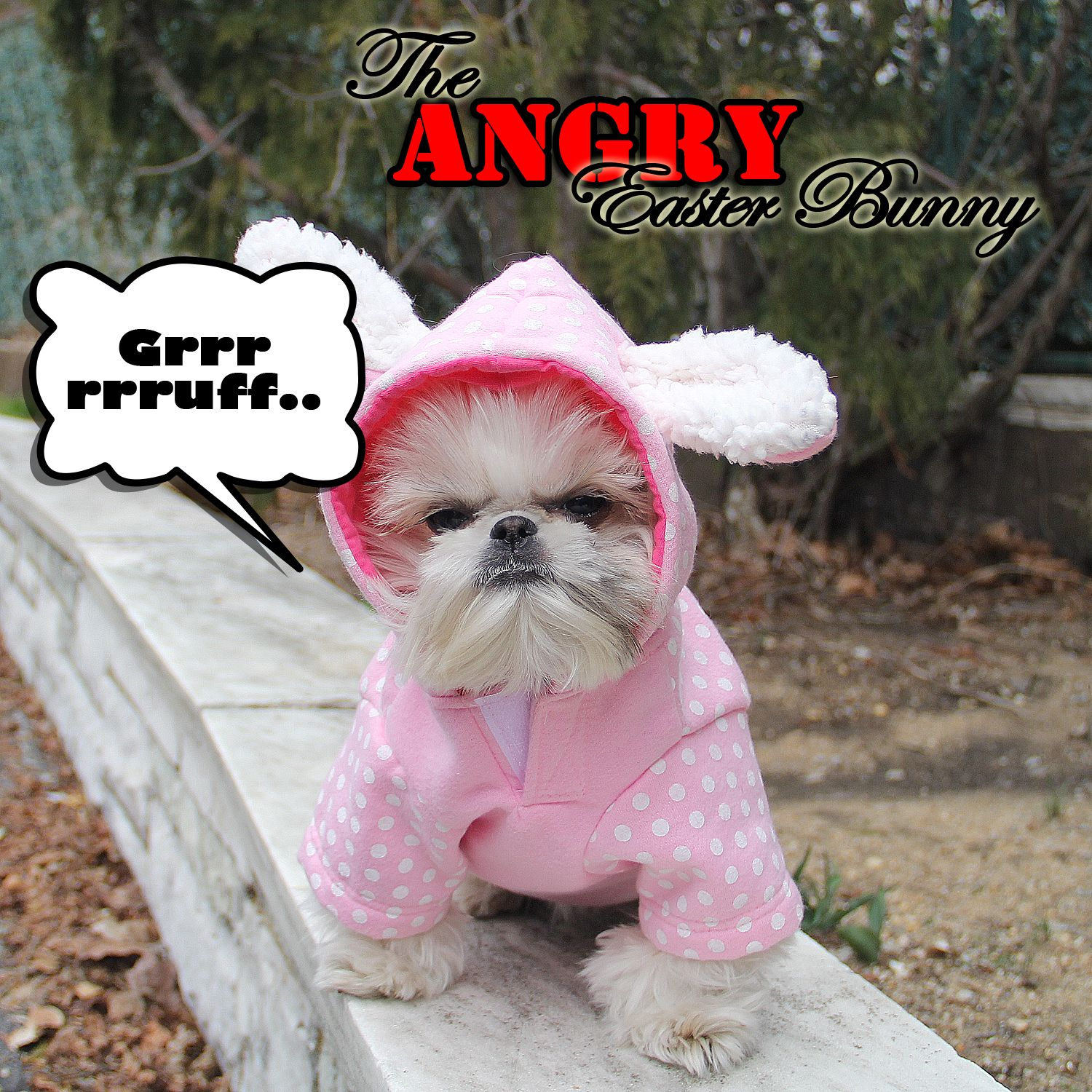 The Angry Easter Bunny Peeing On Your Valuables Shih Tzu Dog