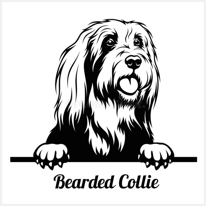 Bearded Collie - Peeking Dogs - Breed Face Head Is