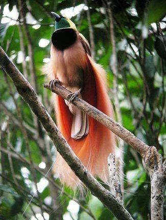 Varirata National Park, Papa New Guinea