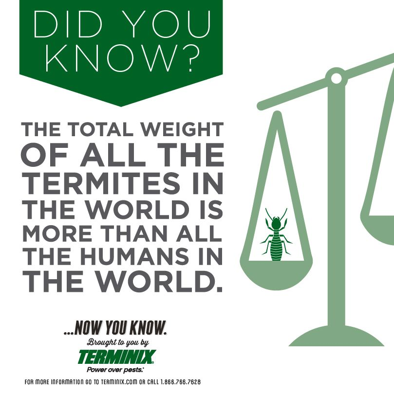 Did You Know The Total Weight Of All The Termites In The World Is More Than All The Humans In The World Dyk Termites Bug Zappers Did You Know