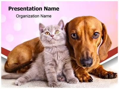 Kitten And Dog Powerpoint Template Is One Of The Best