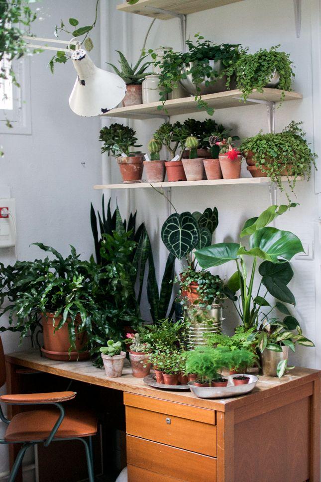 Mama Petula, Paris, Plants, Plant Shop, Urban Jungle Bloggers, Lost in Plantation
