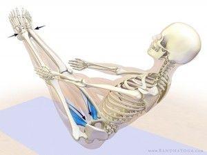 navasana  yoga anatomy yoga muscles yoga asanas
