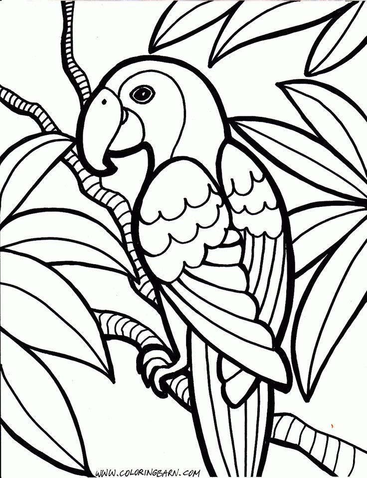 Fish And Birds Colouring Pages