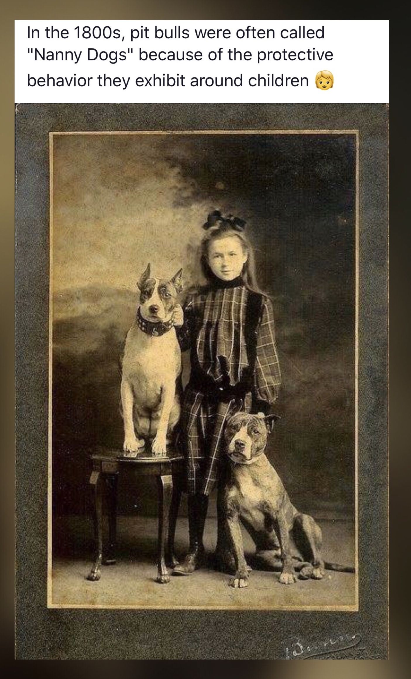 Mik S Pics People Lll Board Vintage Dog Nanny Dog American